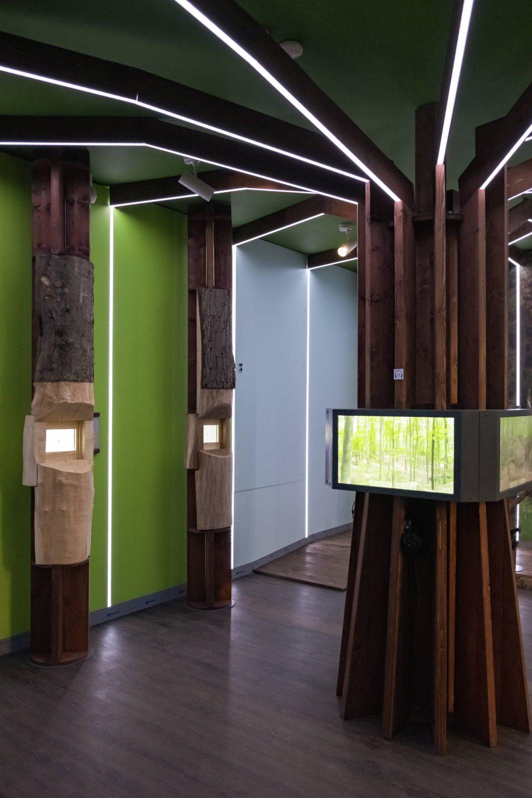 """""""Las zobaczyć toco zagrożone, zobaczyć toco niewidoczne"""", Drawieński Park Narodowy, Drawno, 2019"""